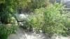 Un copac S-A PRĂBUȘIT la Telecentru. Doi pietoni, TRAUMAȚI