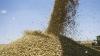 Recoltă de grâu mai mare! Ce roadă au strâns fermierii în acest an