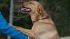 ADEVĂRAT EROU! Un cățel i-a salvat viața unui băiat rătăcit în pădure (FOTO)