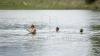 ATENŢIE la scăldat! Apa din râul Nistru şi lacul Ghidighici, INFECTATĂ cu vibrionul holeric