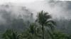 Dubaiul va avea propria pădure tropicală. Unde va fi construit ecosistemul
