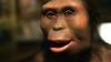 Descoperire ULUITOARE! Cum a murit Lucy, unul dintre cei mai cunoscuți strămoși ai omului