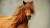 S-AU ÎNTRECUT ÎN FRUMUSEŢE! Peste 30 de cai de rasă au participat la concurs