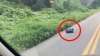 A văzut pe marginea drumului o pungă de gunoi care se mişca. A răms ŞOCAT când a deschis-o (VIDEO)