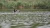 Tragic! Un bărbat a MURIT în lacul din Ialoveni