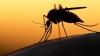 STUDIU: Zika s-ar putea trage din epidemia de febră galbenă din 1947