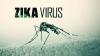VIRUSUL ZIKA: Roche a obținut o autorizație pentru un test de diagnosticare a virusului