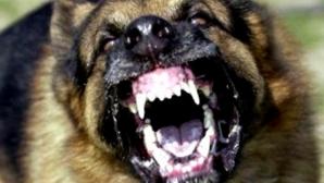 Caz şocant în Londra. După ce ar fi consumat cocaină, un câine și-a ucis stăpânul