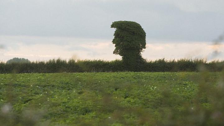 INEDIT! Un arbore seamănă izbitor de mult cu Donald Trump (FOTO)