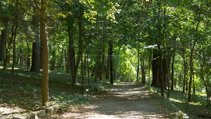 Un mediu mai curat pentru Moldova: Suprafața pădurilor va fi extinsă