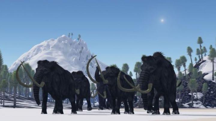 Au dispărut acum 4.000 de ani, dar acum s-a luat decizia! Ce se va întâmpla cu MAMUŢII