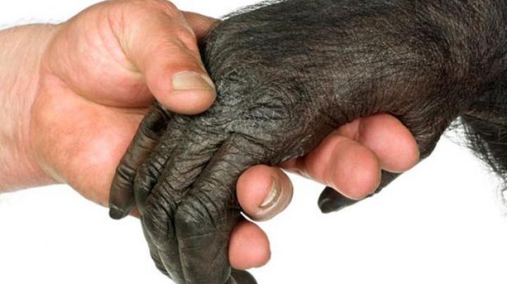 Cinci aspecte care atestă faptul că evoluţia umană continuă