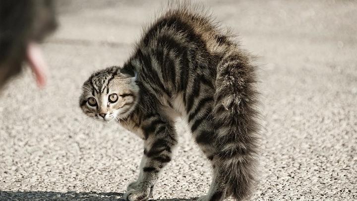 CRUZIME FARĂ MARGINI! Un bărbat din Bălți, filmat în timp ce TORTURA și MALTRATA o pisică