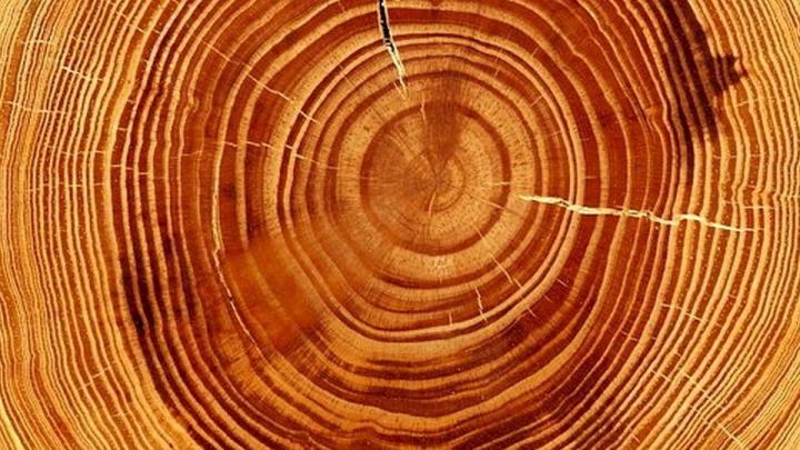 Inelele copacilor ascund secrete FASCINANTE. Ce informaţii preţioase ar putea ele releva