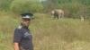 Misiune NEOBIŞNUITĂ! Poliţiştii români, pe urmele unui elefant fugar (VIDEO)