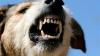 ALERTĂ! Un bărbat, diagnosticat cu RABIE după ce a fost muşcat de propriul câine