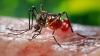 VIRUSUL ZIKA. Singapore a înregistrat 27 de noi cazuri de infecţie