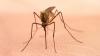 ALERTĂ! Virusul West Nile a ucis încă un român