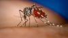 Moldova, ÎN PERICOL! Ţânţarii pot răspândi virusul West Nile şi în ţara noastră