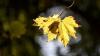 METEO 5 septembrie: Toamna se face tot mai simţită. Câte grade vor indica termometrele