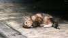 Imagini INTERZISE iubitorilor de pisici. Momentele CUMPLITE prin care a trecut o felină (VIDEO)