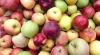 BINE DE ŞTIUT! Care este cel mai sănătos soi de mere