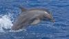 NU pentru vânarea delfinilor! Zeci de apărători ai animalelor au protestat în faţa ambasadei Japoniei