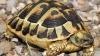 Broasca ţestoasă de la Vadu, eliberată în Marea Neagră