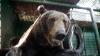 A învins un urs cu mâinile goale. Cum a scăpat un japonez de atacul animalului