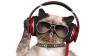 """Universal Music lansează discul """"Music for Cats"""", elaborat de un profesor din Maryland pentru a calma pisicile"""