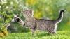 ATENŢIE! Pisicile fără stăpân pun în pericol ecosistemul global
