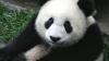 Imaginea care a VIRALIZAT Internetul. Tu găseşti ursul panda? (FOTO)