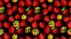 Căpşuni pentru tot anul. Declaraţia agricultorul care cultivă fructele până iarna