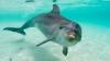 Incident neobişnuit în Australia. Un surfer, la un pas să fie strivit de un delfin (VIDEO)