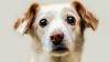 INTERVENŢIE DE URGENŢĂ! Un câine, salvat de la moarte după ce a rămas blocat într-o groapă (VIDEO)
