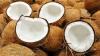 CRIZĂ în Caraibe. Ţara ar putea rămâne fără nuci de cocos din cauza bolilor și a neglijenței