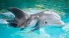 """INEDIT! Oamenii de știință au înregistrat pentru prima oară o """"conversație"""" între doi delfini"""