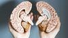 Care este diferenţa dintre emisfera stângă şi emisfera dreaptă a creierului? Ce spun savanţii