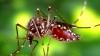 O nouă maladie transmisă de ţânţari, identificată în Haiti