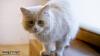 Cartea Recordurilor Guinness: Pisica care a realizat cele mai multe trucuri într-o singură minută (VIDEO)