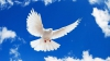 Ziua Internațională a Păcii, marcată în toată lumea. Descoperă simbolurile acestei sărbători (VIDEO)