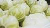 Grădinărit cu apă moartă şi miros insuportabil! Cum creşte legume un moldovean (VIDEO)