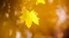 METEO 28 septembrie. Vremea se încălzeşte uşor. Câte grade vom avea în termometre