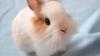 Afacere cu urecheaţi. Un tânăr din raionul Hâncești și-a deschis propria fermă de iepuri