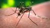 Fragmente genetice ale Viruslui Zika au fost găsite în ochi și lacrimi de șoareci de laborator infectați