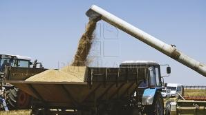Previziunile Organizației pentru Alimentație și Agricultură a Națiunilor Unite: Care va fi recolta de grâu la nivel global