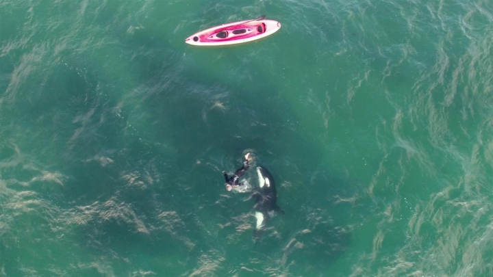"""FENOMENAL! Un canotor """"dansează"""" alături de o balenă ucigaşă (VIDEO VIRAL)"""