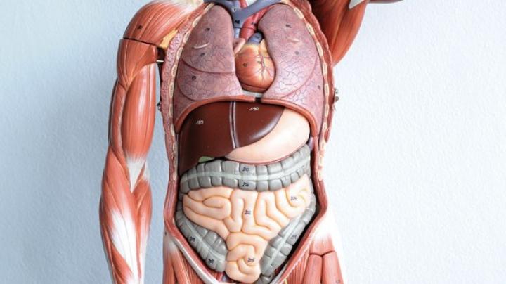 Nu te-ai fi gândit niciodată la asta: Topul celor mai INUTILE organe din corpul uman