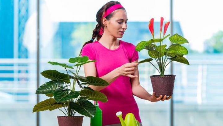 Secrete pe care ți le-ar spune florile tale din casă