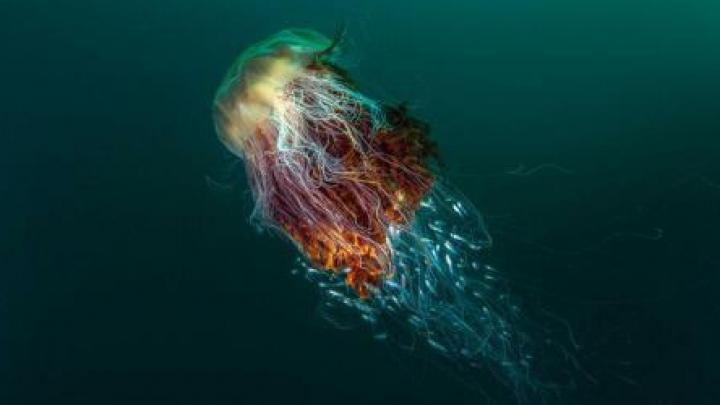 E cea mai frumoasă fotografie de la British Wildlife Photography Awards. Ce conţine şi cui îi aparţine